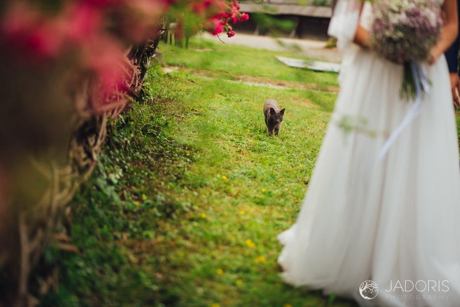 foto-nunta-73
